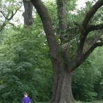 One of the beautiful Oak Trees - Rylee is in the pic to give a sense of the size!