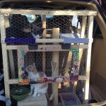 Cats in their travel cage in the back of the van