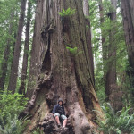 Stout Grove, Jedediah Smith Redwoods Park