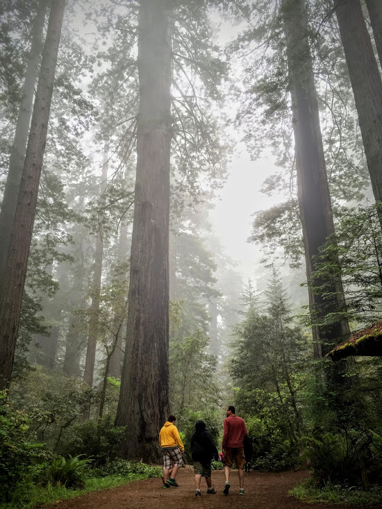 Lady Bird Johnson Grove, Redwoods National and State Parks